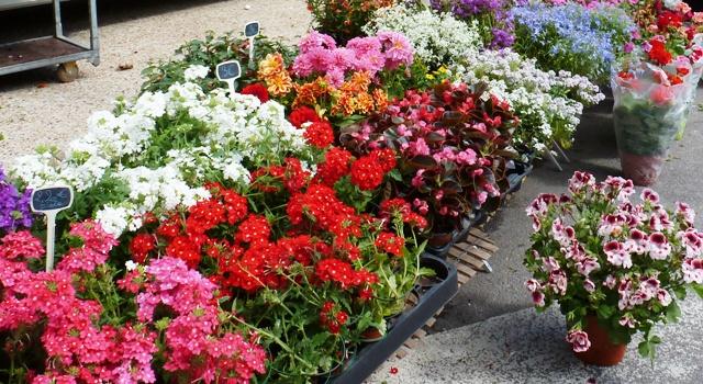 Eymoutiers flower market