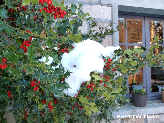 Holly in snow Le Jardin Perdu