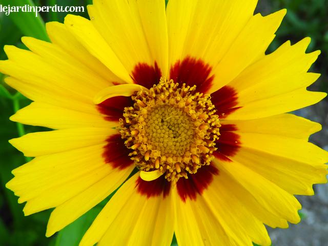Yellow flower Le Jardin Perdu