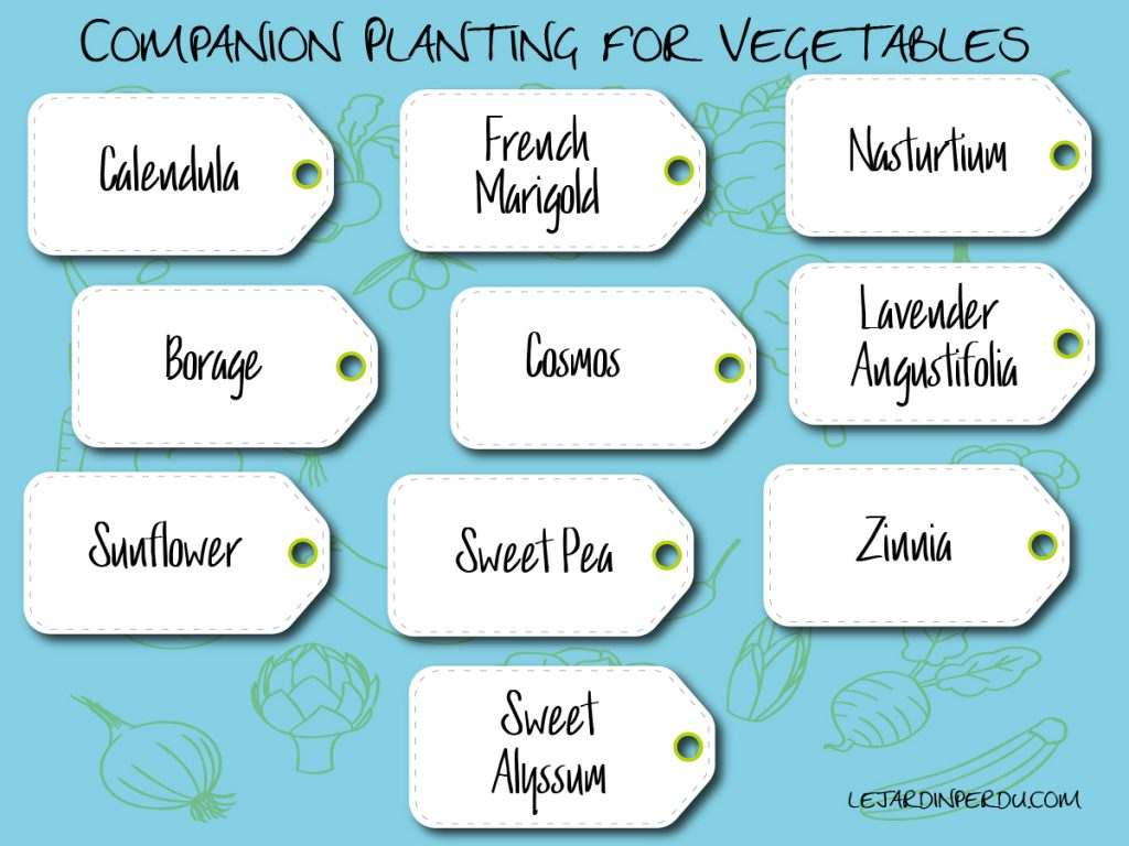 companion plants for you vegetable patch