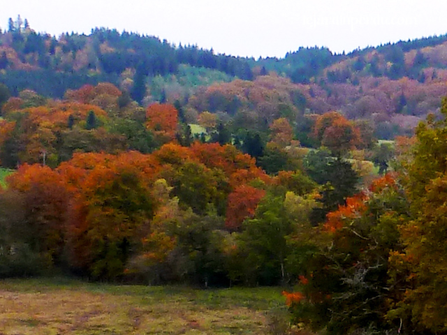 Autumn in Correze