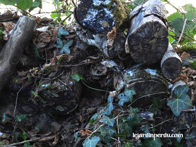 le-jardin-perdu-wildlife-log-pile