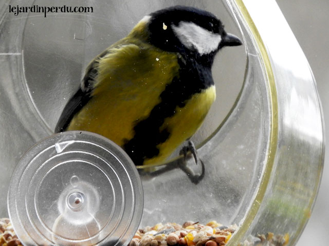 Great Tit on Petit Pod window bird feeder