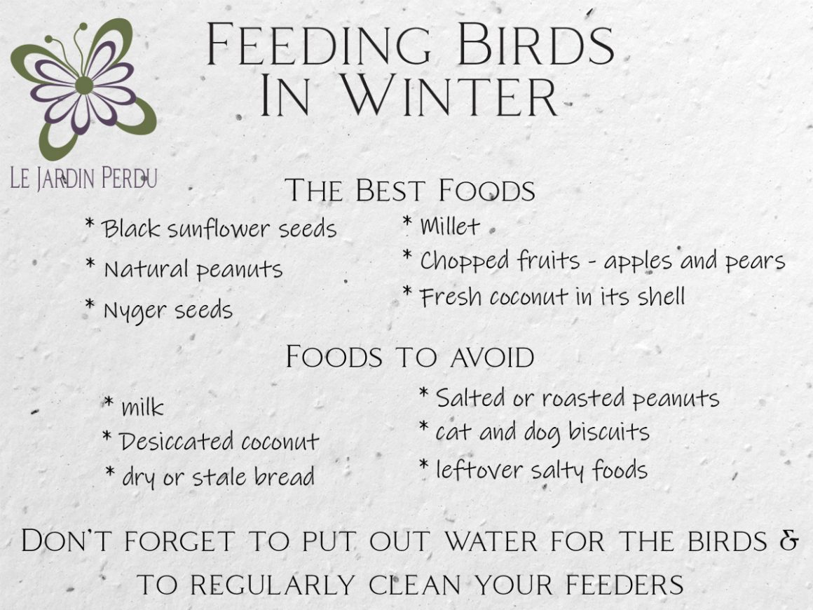 Guide to feeding birds in winter